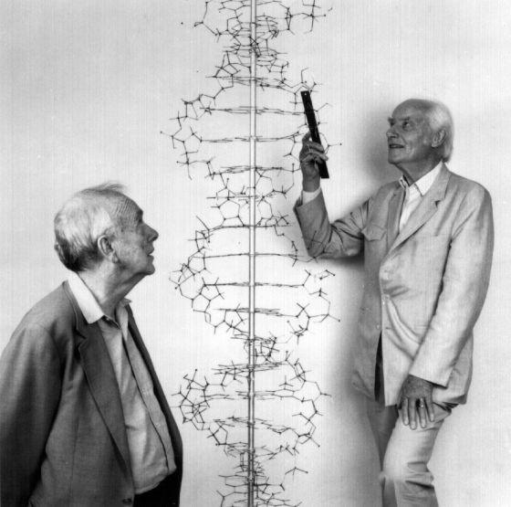 A 65 Años Del Descubrimiento De La Estructura Del Adn Sólo
