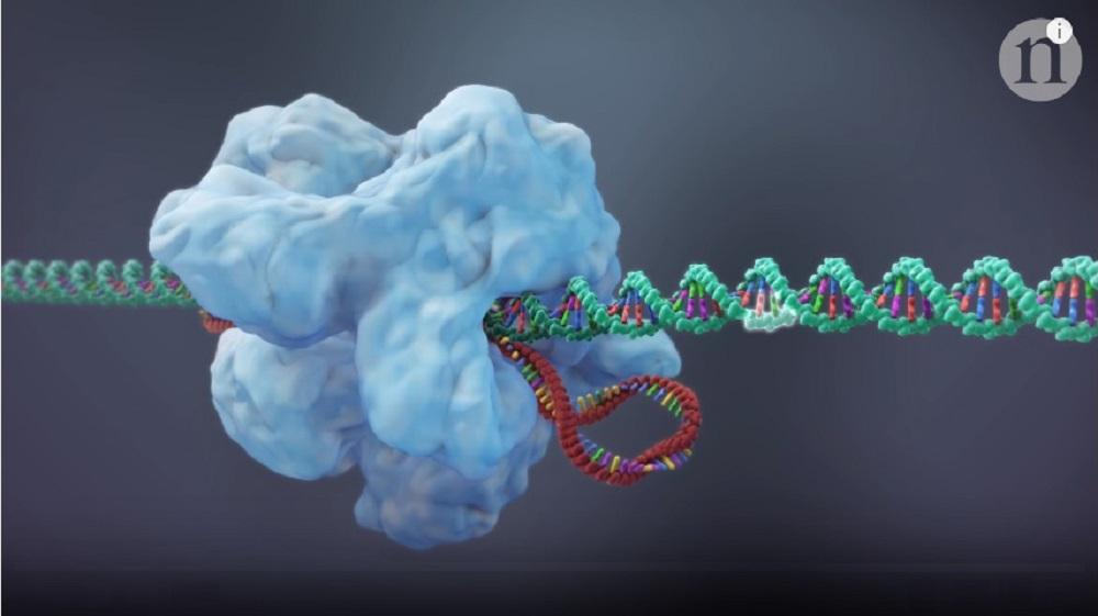 CRISPR-Cas9-screenshot-from-nature-video-1000x561-CRISPR-Gene-editing-and-beyond