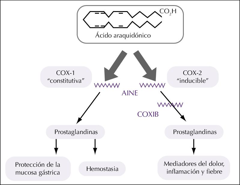 Figura-1-Mecanismo-de-accion-de-los-AINE