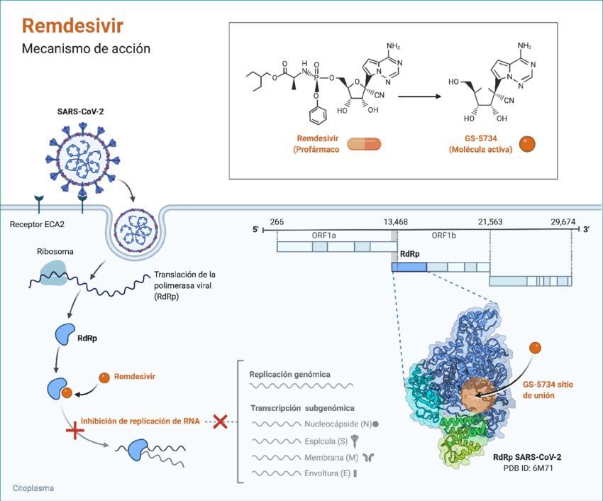 Figura-2-Mecanismo-de-accion-de-remdesivir-Figura-creada-con-BioRender